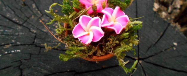 Tündérkert virág cserépben